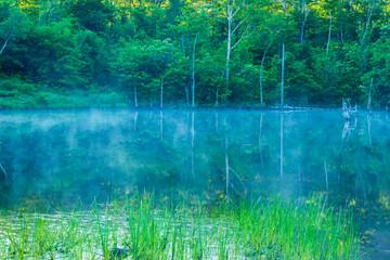朝霧のまいめの池