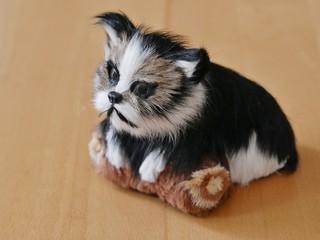 Mürrische Katze