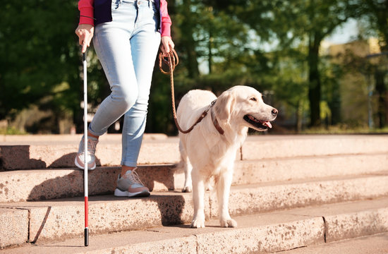 Guide dog helping blind person with long cane going down stairs outdoors