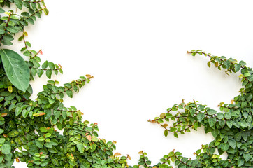 Obraz White walls and small trees in the garden - fototapety do salonu