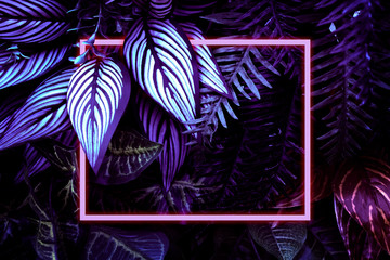 Glowing Neon Rectangular Frame Surrounded By Fluorescent Hosta Leaves, Palm Leaves And Other Plants. Flat Lay Decorated Background.