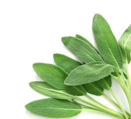 Fototapeta Close up a fresh green sage herb leaf on white background obraz