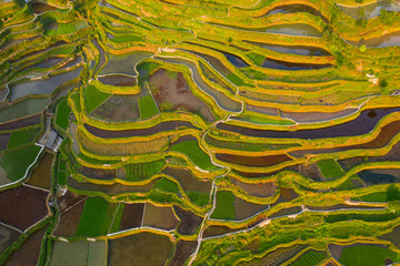 Terraced field in guizhou china