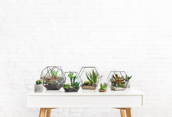 Composition of succulent plants on table, copy space