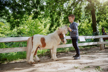 Caucasian boy grooming adorable white and brown pony horse. Sunny day on ranch concept.