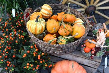 Gemüse, Wochenmarkt, Herbst
