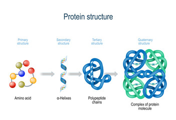 Levels of protein structure from amino acids to Complex of protein molecule.