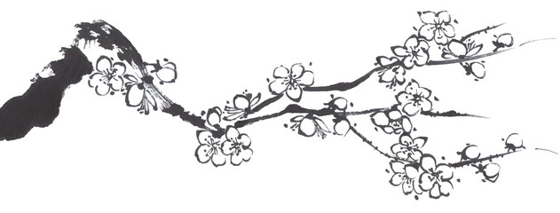 A branch of a blossoming sakura. Contour   flowers of plum mei and  wild cherry . Watercolor and ink illustration of tree in style sumi-e, go-hua,  u-sin. Oriental traditional painting.