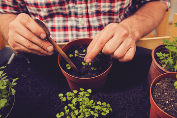 Farmer planting young seedlings flowers in the garden. Gardening concept.