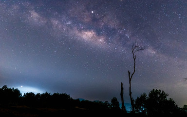 A silhouette of a  tree in front of the Milky Way
