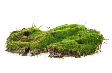Tuinposter Gras Green moss with grass isolated on a white background