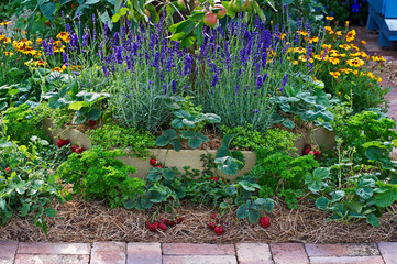 Strawberries, lavender and apples in a fruit and vegetable garden