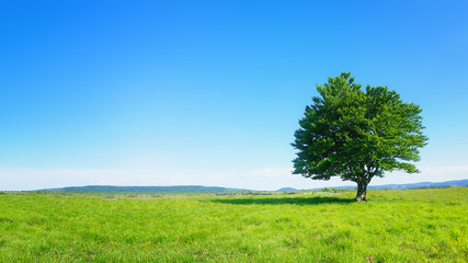 lonely tree against clear blue sky Wall mural