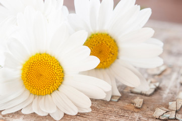 Photo sur Plexiglas Marguerites Chamomile flowers on wooden background with copy space