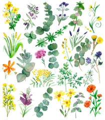 Watercolor hand painted nature set with yellow, orange, violet and blue medicinal flowers and green eucalyptus and herbs branches and leaves collection isolated on white background