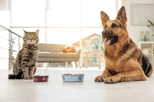 Cat and dog together with feeding bowls on floor indoors. Funny friends