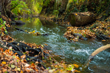 Foto auf Leinwand Forest river stream in the forest