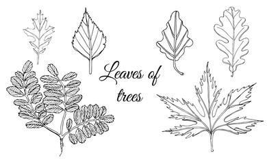 Collection with monochrome  leaves of trees.  Hand drawn ink sketch isolated on white background.