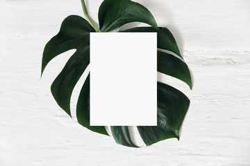 Tropical stationery mock-up scene. Blank greeting card and green monstera leaf on white shabby table background. Swiss cheese plant. Summer branding styled photo, web banner. Flat lay, top view.