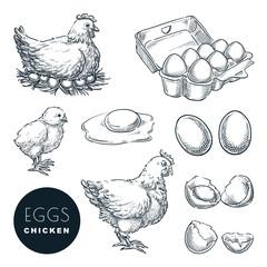 Chicken farm fresh eggs. Vector set of sketch design elements. Hand drawn hen, poultry and little chicken