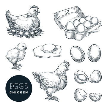 Chicken farm fresh eggs. Vector set of sketch design elements. Hand drawn hen, poultry and little chicken