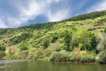 Hang der Mosel mit Weinbergen und Weinbergsbrachen bei Valvig in Rheinland-Pfalz, Deutschland