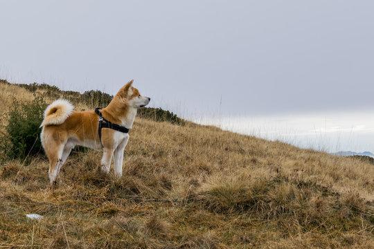 Kenta While Hiking