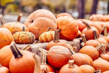 pile of pumpkins in the farm market. harvest festival Wall mural