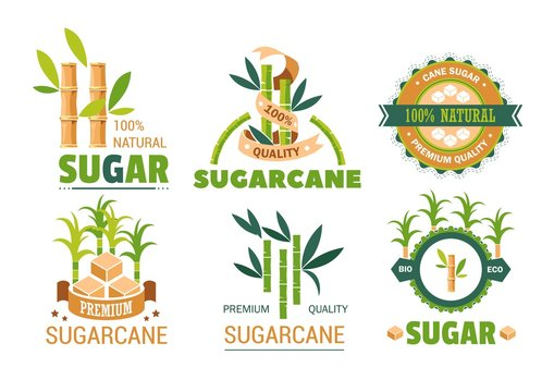 Sugar cane isolated icons plant and sweetener production