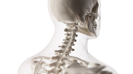 3d rendered medically accurate illustration of the cervical spiine