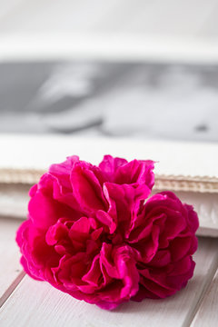 Purple rose with a photograph in a wedding album in the background.  On white wood slatted surface