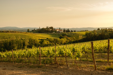 Tuscany sunny landscape. Typical for the region tuscan farm house, hills, vineyard. Italy Fototapete