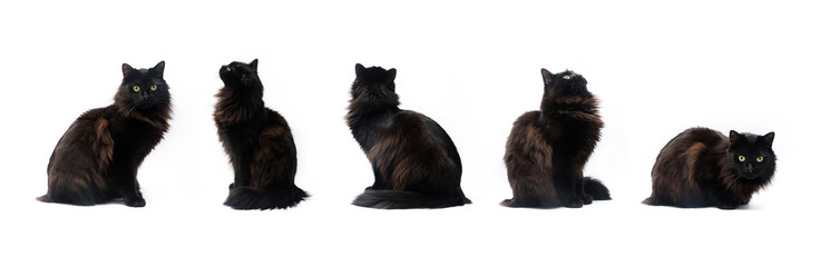 Composite of black cat in different poses isolated on white background. Clipping path, different...