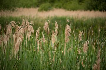 The Christopher Cadbury Wetland Reserve at Upton Warren, wildlife trust Worcestershire