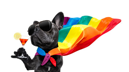 Fotorolgordijn Crazy dog gay pride dog