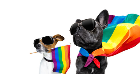 Foto auf Acrylglas Crazy dog gay pride dogs