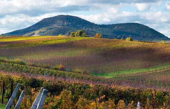 Weinberge im Herbst, Südliche Weinstrasse