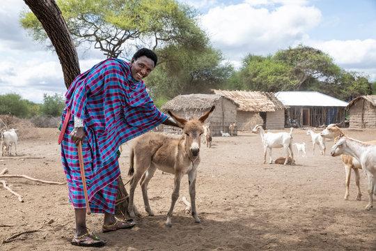 maasai man and a baby donkey