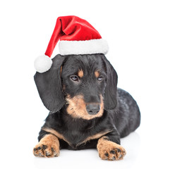 Dachshund puppy in red christmas hat lying in front view. isolated on white background