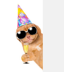 Smiling puppy  in party hat holding glass of champagne behind empty white banner. isolated on white background