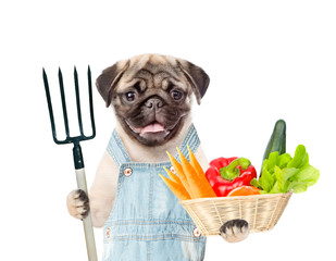 Funny puppy farmer with pitchfork and basket of vegetables. isolated on white background