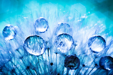 Beautiful dew drops on a dandelion seed. Macro. Beautiful soft light blue and violet background. Selective focus. Background with copy space.