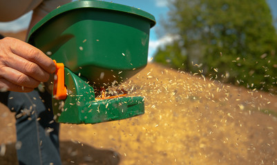 Fototapeta CLOSE UP, DOF: Unrecognizable person sowing grass seeds with a plastic device. obraz