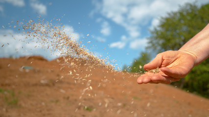 Fototapeta COPY SPACE: Unrecognizable person sowing grass across patch of dirt on sunny day obraz