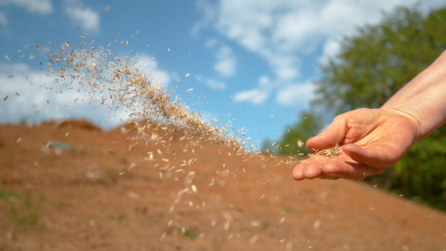 COPY SPACE: Unrecognizable person sowing grass across patch of dirt on sunny day