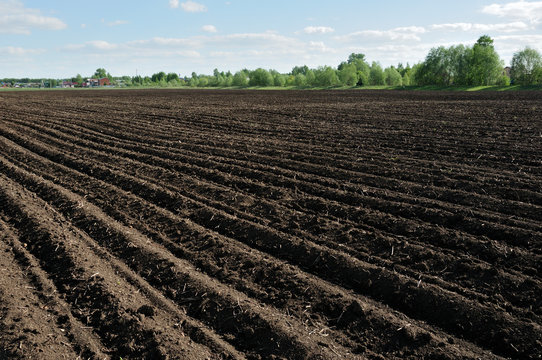 Furrows row pattern in a plowed field prepared for planting crops in spring. Horizontal view in perspective