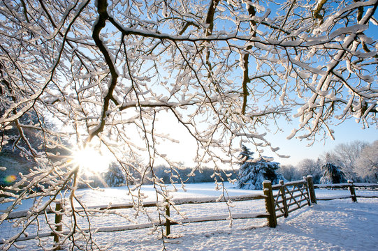 A bright winter scene with sunburst shining through snow covered tree branches and a wooden fence and gate in a country scene.United Kingdom - Image.