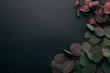 top view of eucalyptus leaves on black with copy space Wall mural