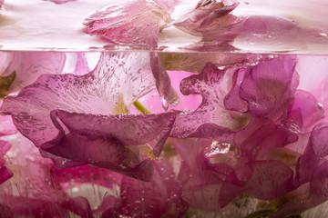 Wicken in kristallklarem Eis 4