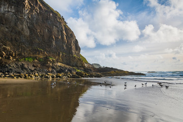 High, rugged cliffs, seagulls, blue sky, and puffy white clouds reflected in the wet sands of a beach along the Oregon coast